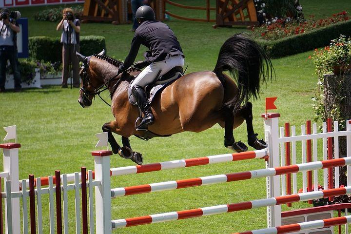 Horse Show Course